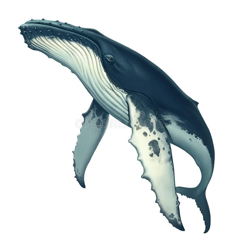 Free Humpback Whale Realistic Isolated. Big Gray Whale. Royalty Free Stock Photo - 141885305