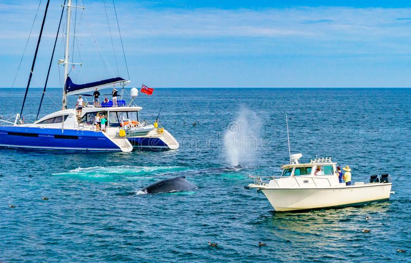 Humpback wieloryb między dwa małymi statkami Provincetown, Cape Cod, Massachusetts, USA zdjęcie royalty free