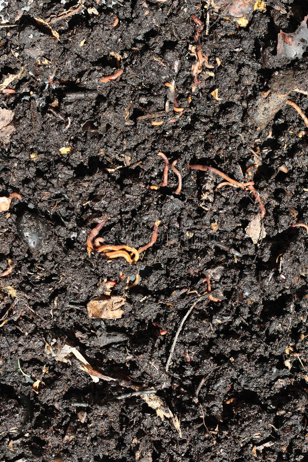 Humus with earthworms. Humus compost with large amount of earthworms royalty free stock photography