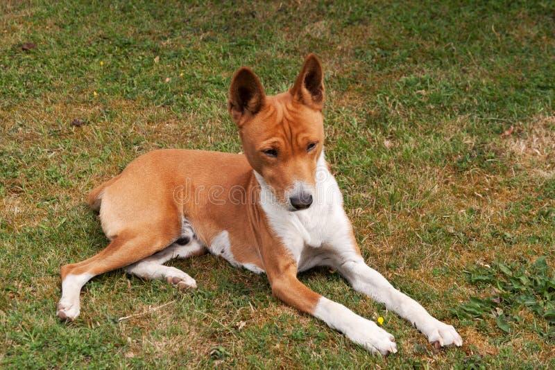 hundåldringen gräs att solbada royaltyfria bilder