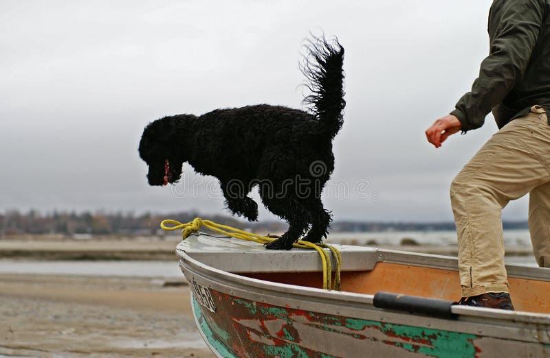 hund överbord royaltyfria bilder