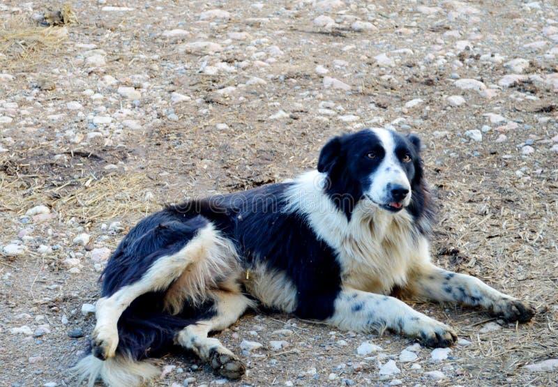Hund övergiven väg som väntar på hans förlage arkivbilder