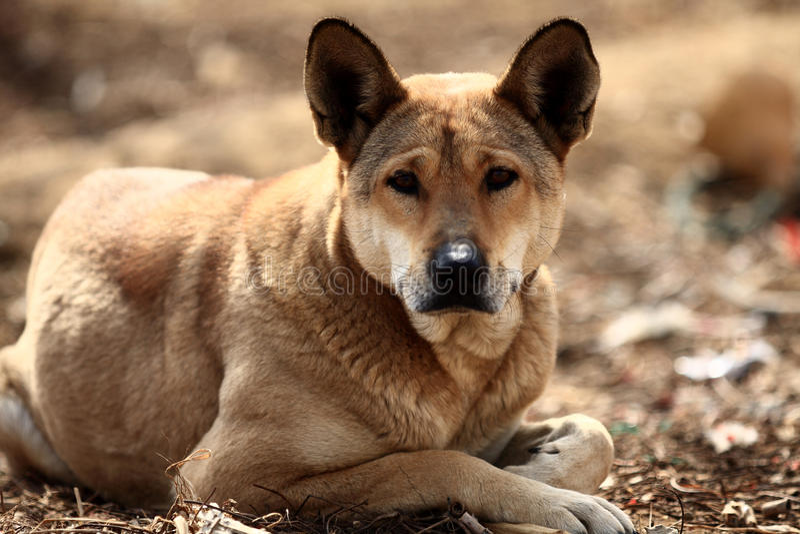 hund fotografering för bildbyråer