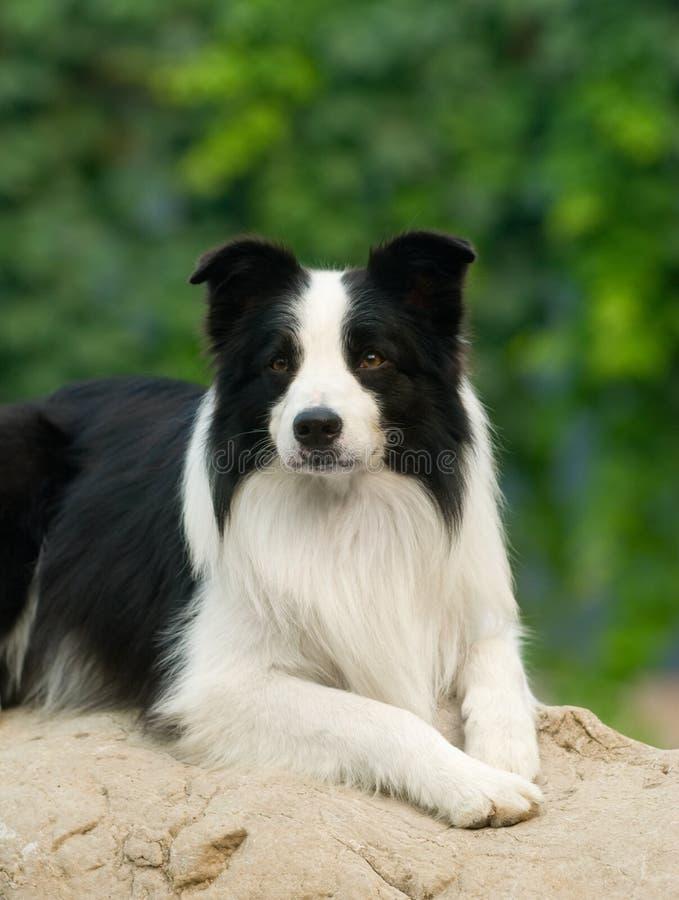 Hund stockfotografie