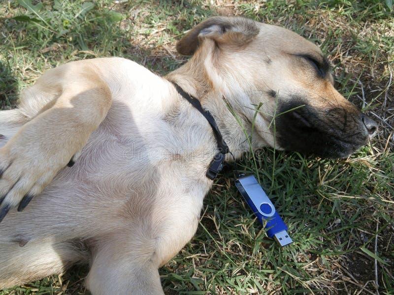 IT-Hund stockfoto