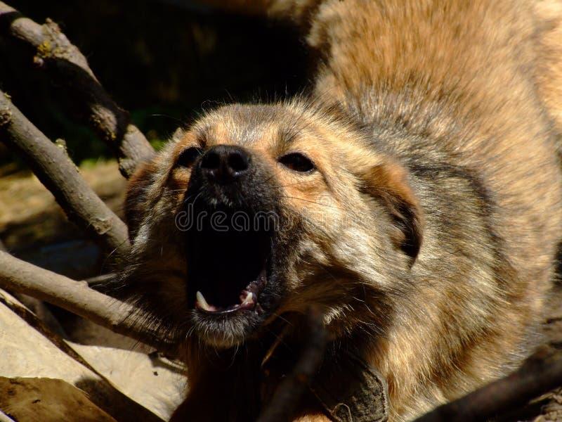 Hund Kostenlose Stockbilder