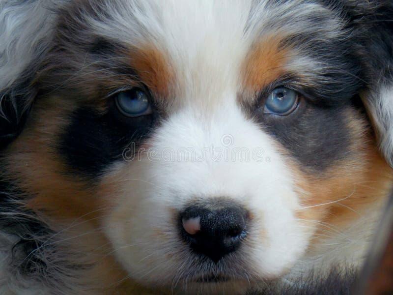 Hund! royaltyfri fotografi