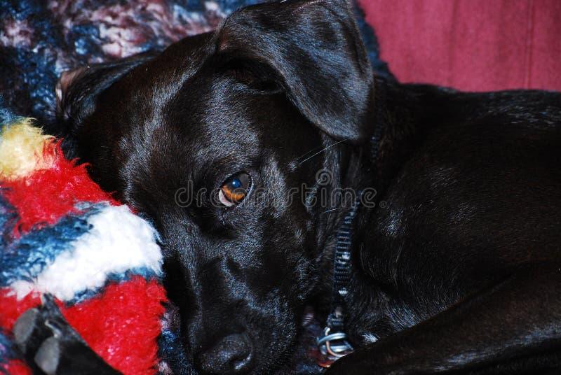 Hund als Kameramodell stockbild