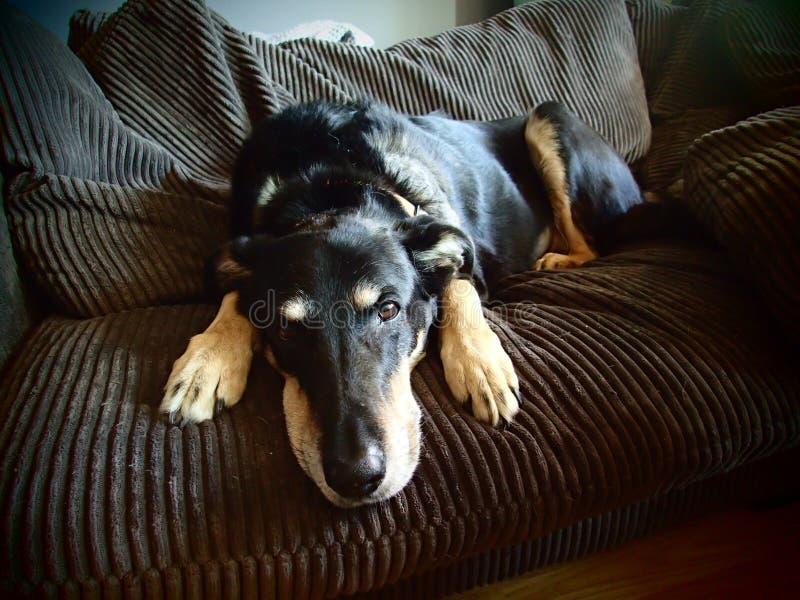 Hund auf Couch lizenzfreie stockfotografie