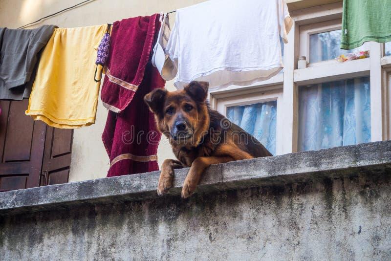 Hund auf dem Balkon Sie aufpassend lizenzfreie stockfotografie
