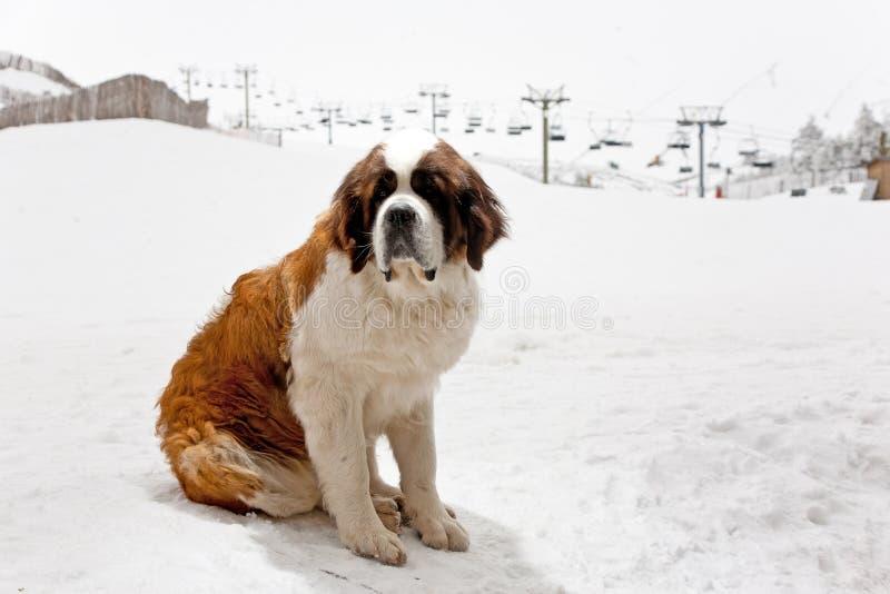 Hund auf dem Schnee lizenzfreies stockfoto