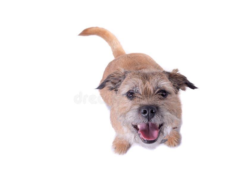 Hund auf dem weißen Hintergrund, eingelassen einem Studio stockfotografie