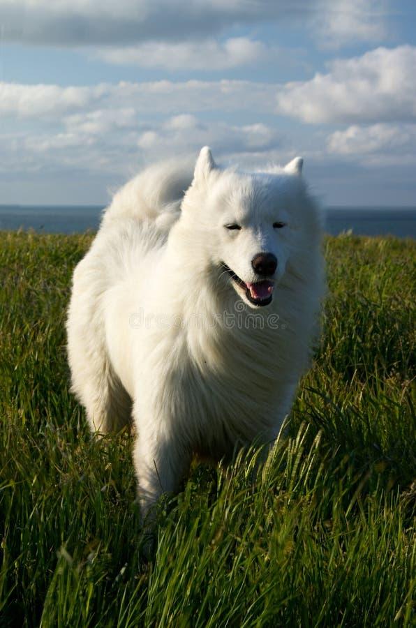 Hund Auf Dem Wind Lizenzfreie Stockfotografie