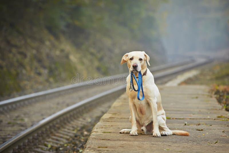Hund auf der Bahnplattform lizenzfreies stockbild