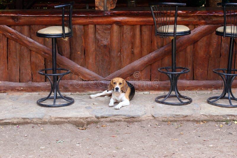 Hund auf der Stange stockfotografie