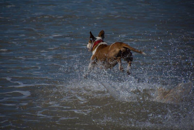 Hund auf einem Strand stockfoto