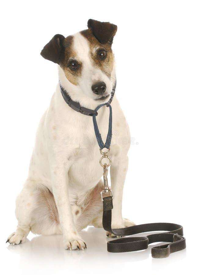 Hund auf einer Leine stockbild