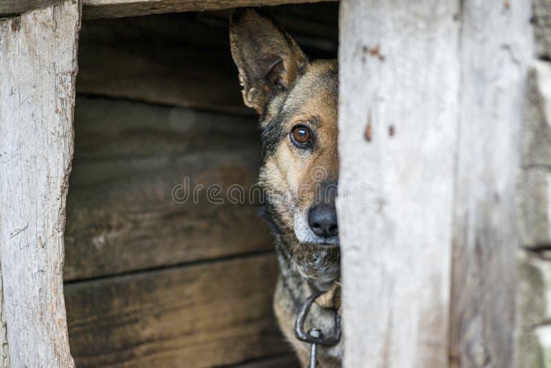Hund auf einer Leine in einem Hundezwinger Tier auf der Kette Hund mit traurigen Augen stockbild
