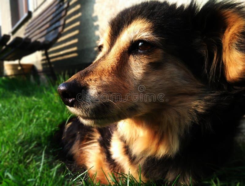 Hund auf Garten stockbild