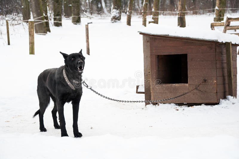 Hund auf Hundehüttenkette lizenzfreie stockfotos