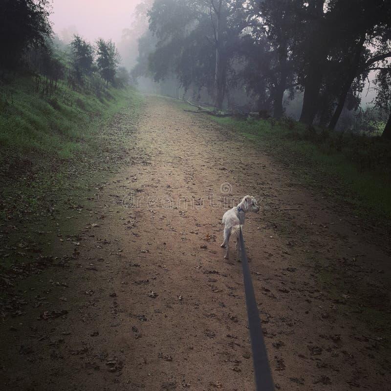 Hund auf Leine im Wald lizenzfreie stockfotografie