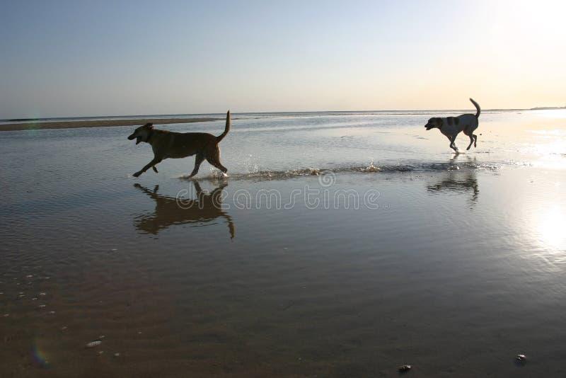 Hund auf Strand lizenzfreies stockfoto