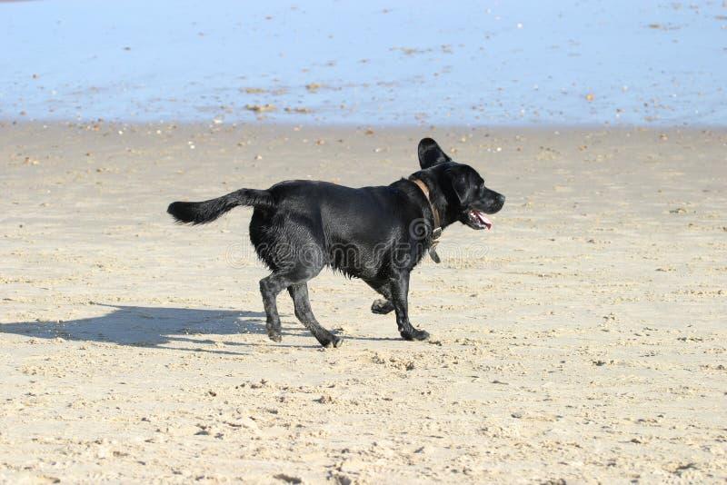 Hund auf Strand stockfoto