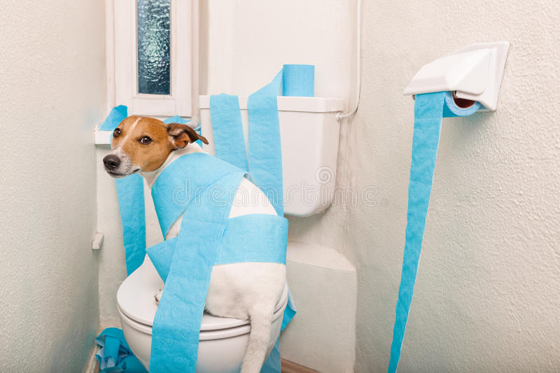 Hund auf Toilettensitz- und -papierrollen lizenzfreies stockfoto