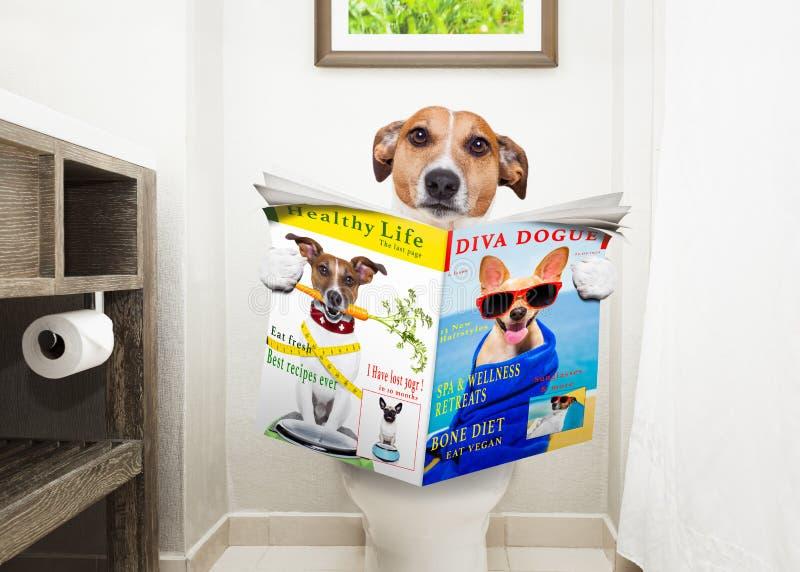 Hund auf Toilettensitzlesezeitung stockbilder