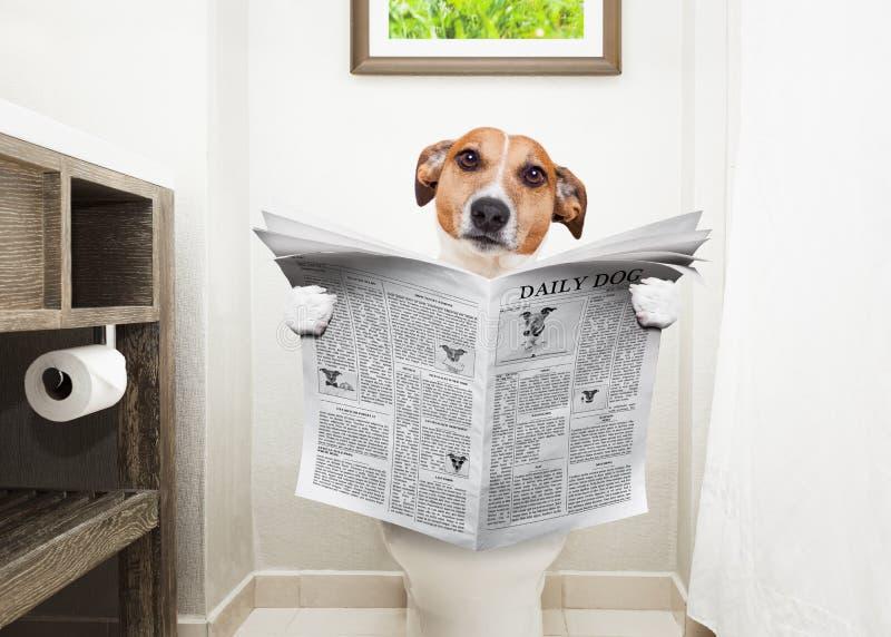 Hund auf Toilettensitzlesezeitung lizenzfreie stockbilder