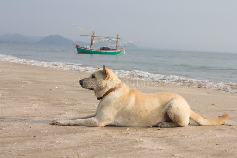Hund av stranden arkivfoto