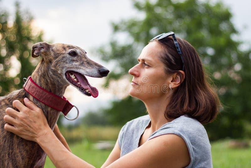 Hund bästa vän av folk Spansk vinthund royaltyfri foto