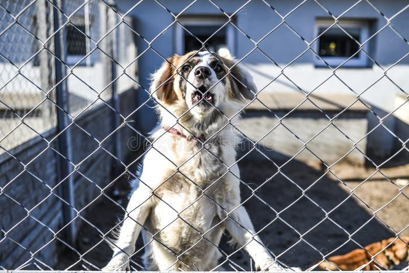 Hund bak stängerna i det djura skyddet royaltyfria bilder