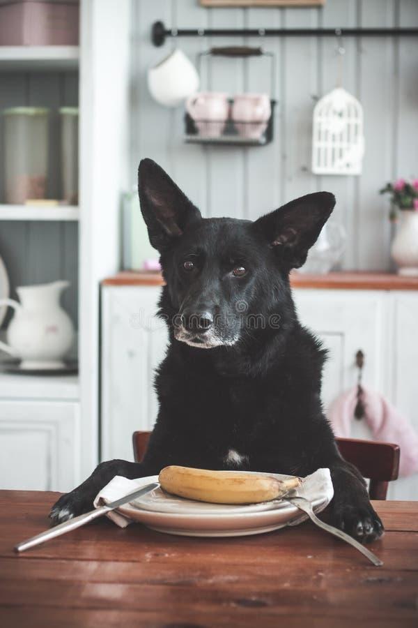Hund, Banane lizenzfreies stockfoto