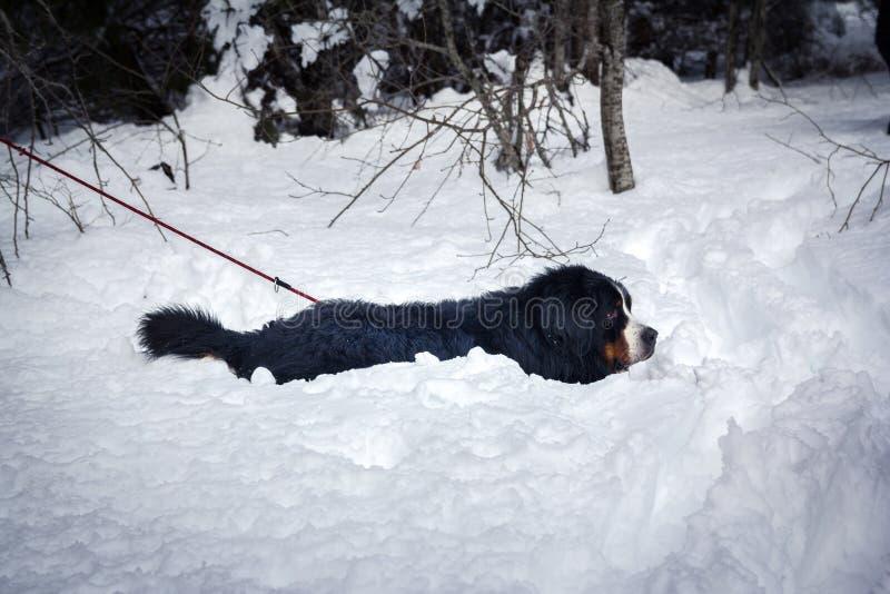 Hund bedeckt im Schnee lizenzfreie stockbilder