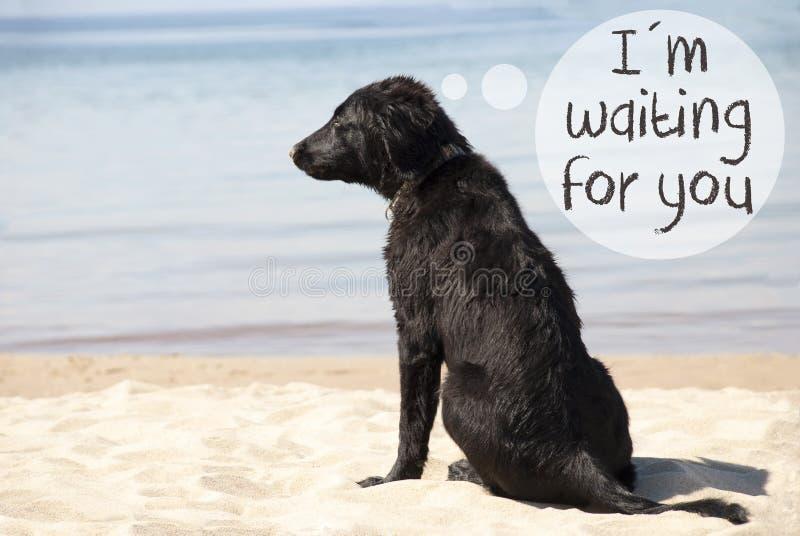 Hund bei Sandy Beach, Text warte ich auf Sie lizenzfreie stockfotos
