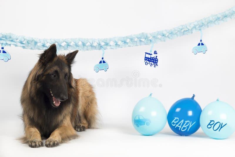 Hund belgisk herde Tervuren som lägger med baby med hjärtfelpojken med ballonger och girlander arkivbild