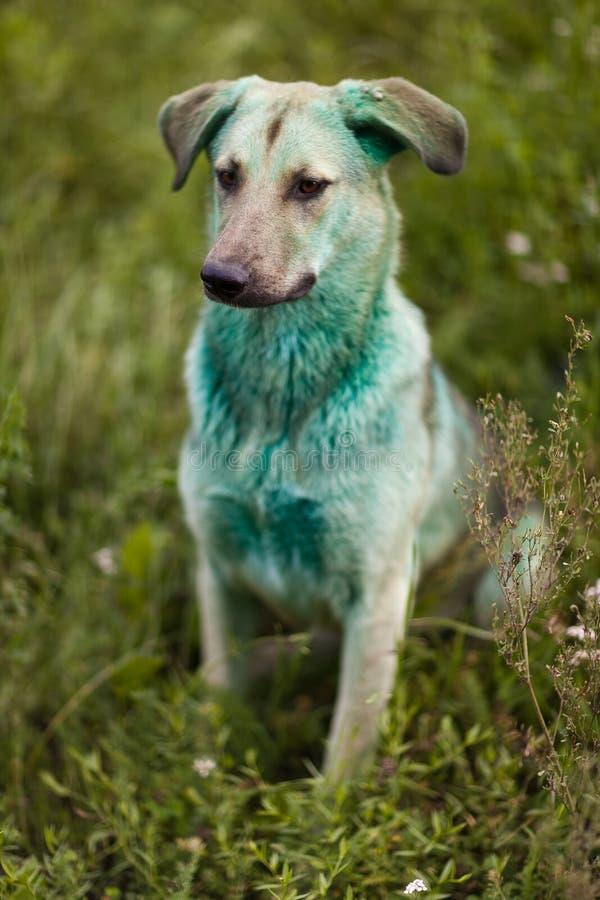 Hund beschmutzt in der grünen Farbe Abschluss oben lizenzfreie stockfotografie