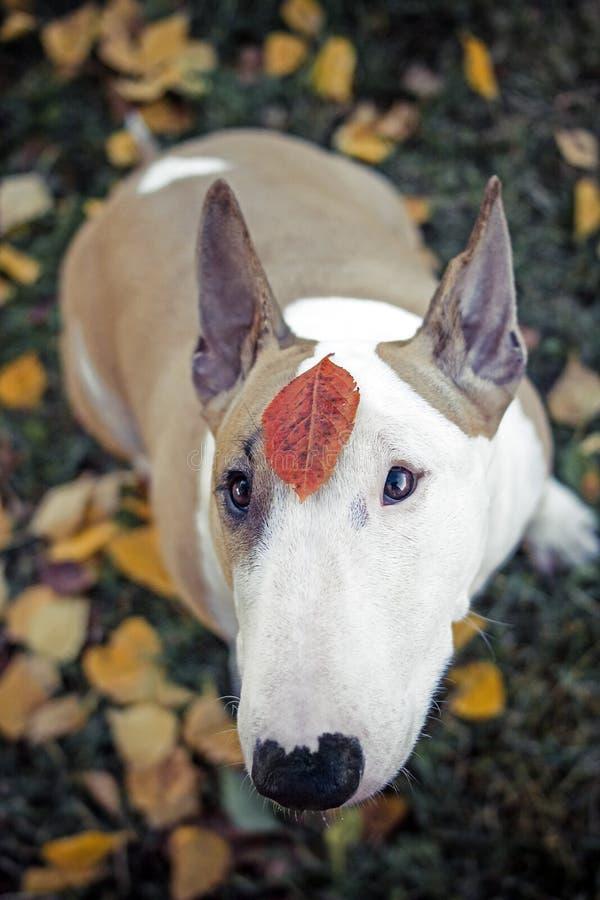 Hund blommor som är ledsna royaltyfria foton