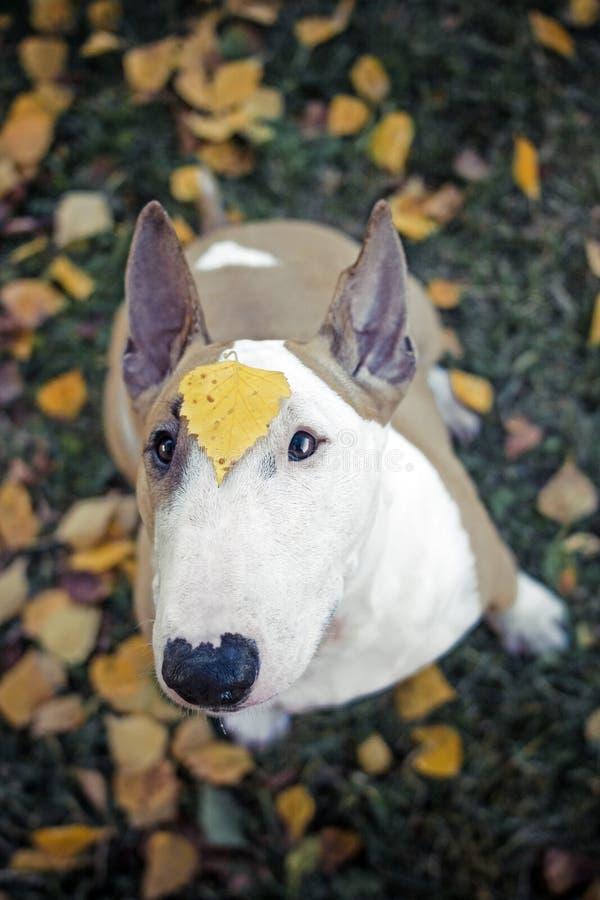 Hund blommor som är ledsna royaltyfri bild