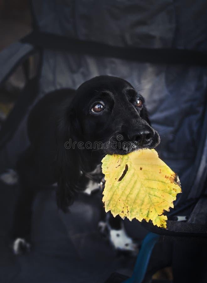 Hund, Blumen, traurig lizenzfreie stockfotos