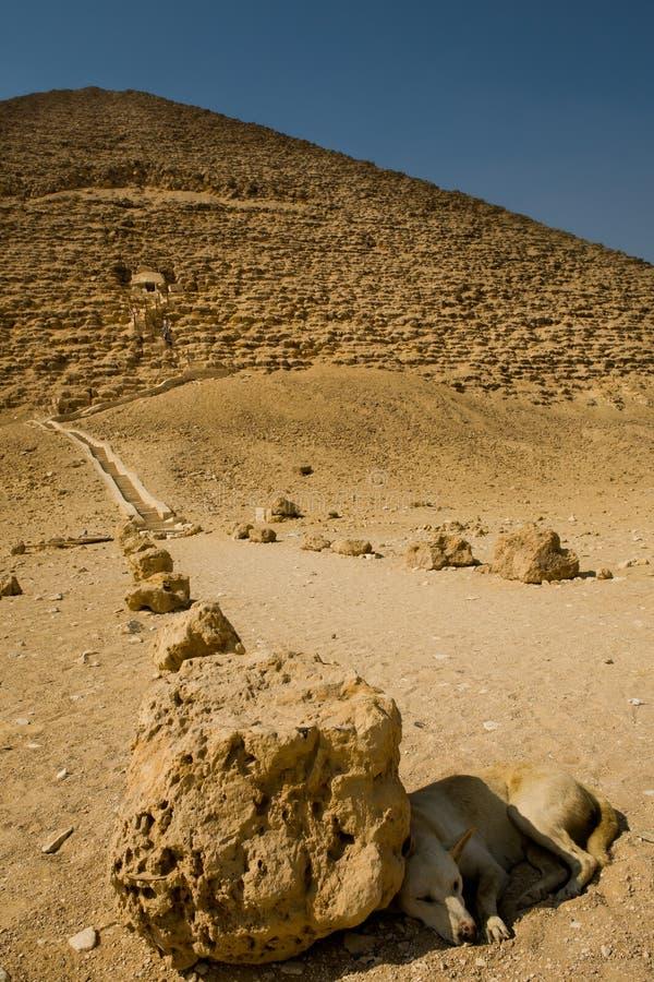 Hund bredvid den röda pyramiden arkivbilder