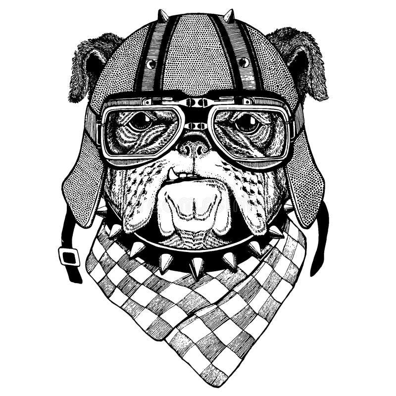 Hund bulldogg som bär en motorcykel, aero hjälm Utdragen bild för hand för tatueringen, t-skjorta, emblem, emblem, logo, lapp royaltyfri illustrationer