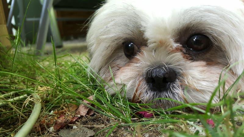 Hund stock image