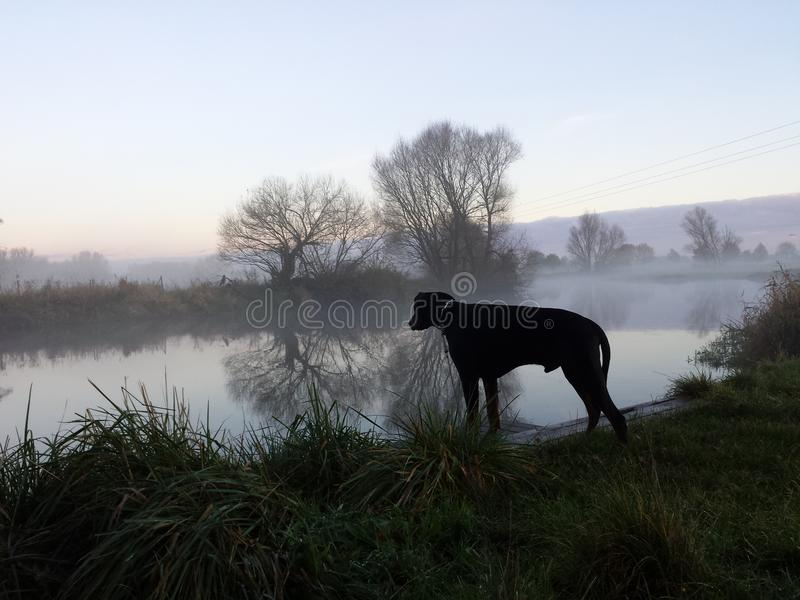 Hund in dem Fluss stockbilder