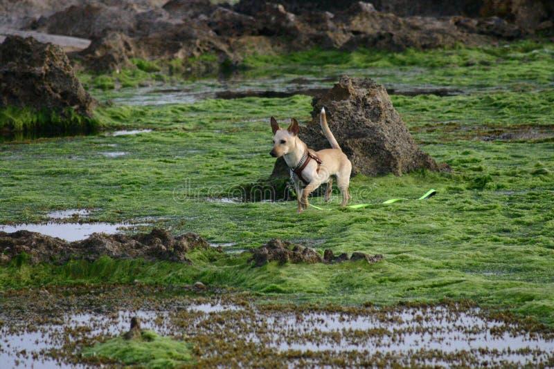 Hund in dem Meer stockbilder