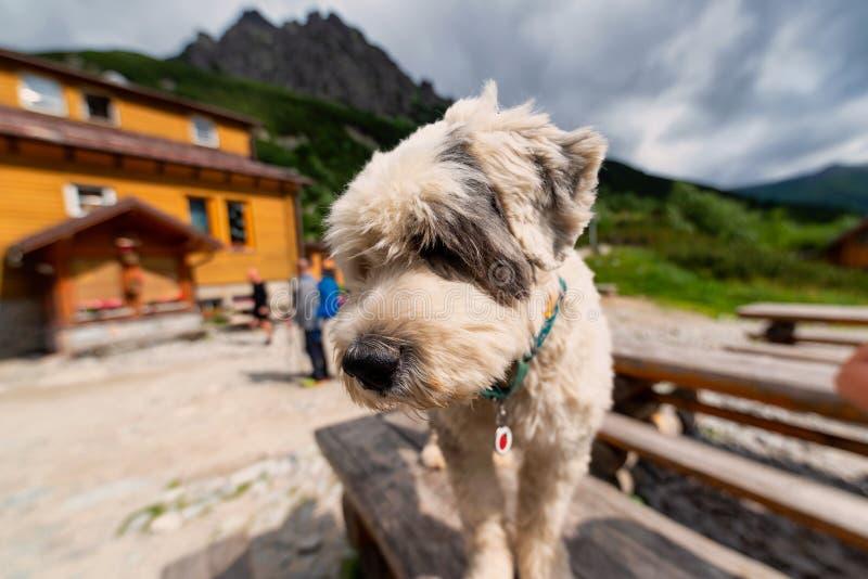 Hund in den Bergen lizenzfreie stockfotografie