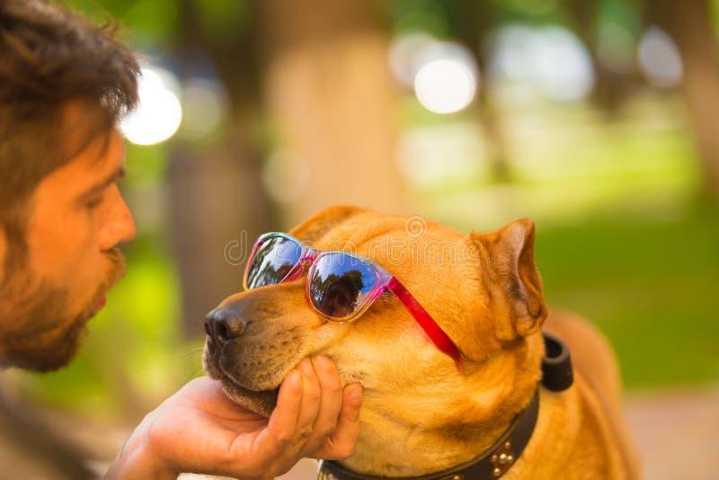 Hund in den Brillen mit einem männlichen Modell stockfotografie