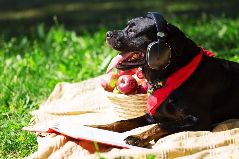 Hund in den Kopfhörern lizenzfreie stockbilder