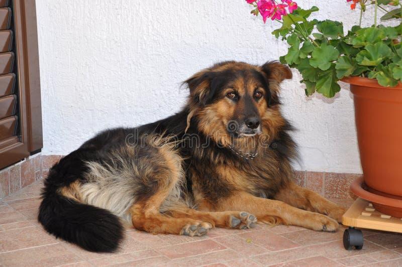 Hund, der allein stillsteht lizenzfreies stockbild